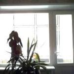 Пластиковое окно - балконный блок