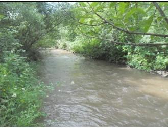 река позади дачного участка