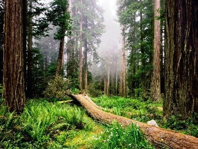гроза в лесу