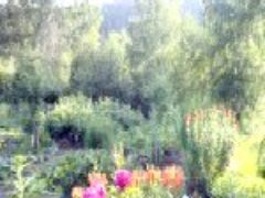 Дачные дела в июле цветы спелая клубника сорняки и гнус