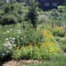 Сад и огород в августе прекрасные цветы и урожай овощей