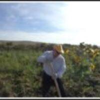 Наш урожай картофеля с участка три сотки агротехника