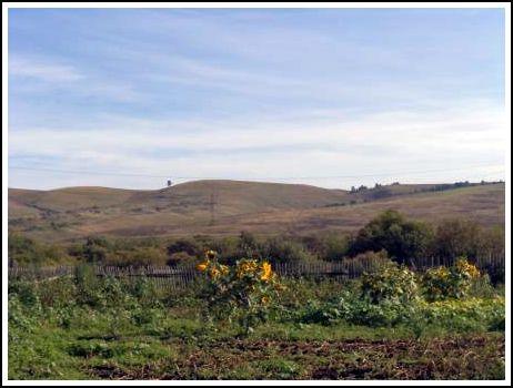 на поле растут сидераты