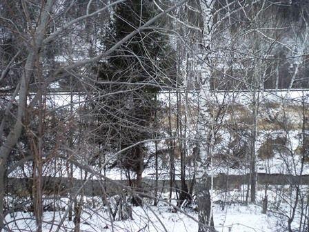зимний лес около реки