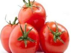 Продолжаю посевы в феврале высокорослых тепличных помидоров