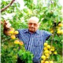 Альтернативное садоводство из города Саяногорска в Сибири