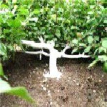 Форма кроны яблонь формируется садоводом
