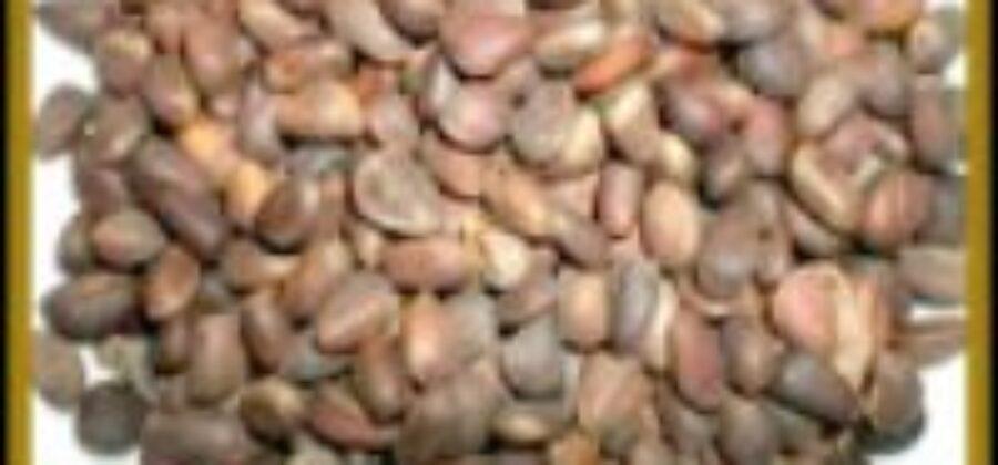 Кедровые орехи полезные свойства ценятся сибиряками