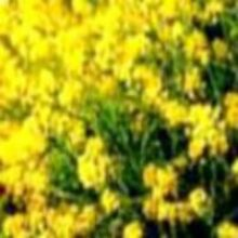 Улучшить плодородие почвы для получения урожая