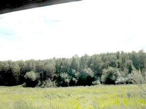 Напротив домов лес