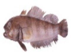Поджарить рыбу натотению по рецепту в огуречном рассоле