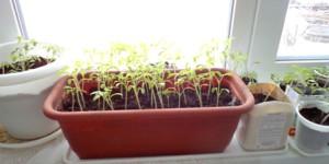 растения пересажены