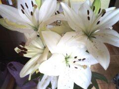 Маленькие радости завели котенка и зимой дома расцвели лилии
