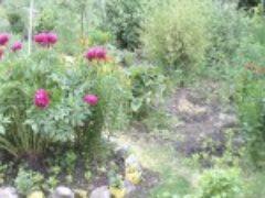 Цветочная клумба на даче много лет на одном месте