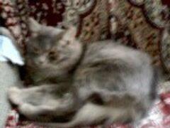 Воспитание кошки в многоквартирном доме — на втором этаже