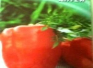 Сорта перцев на рассаду сею в начале марта чтобы не перерастали