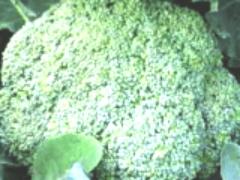 Посев капусты на рассаду
