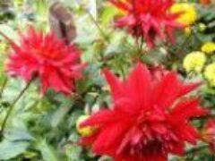 Красивая цветочная клумба получилась только в сентябре