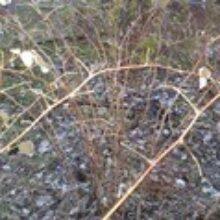 Уход за кустами малины поздней осенью