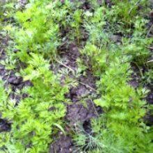 Уход за огородом в июне выращивание растений на грядах