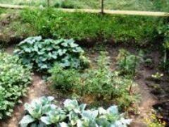 Выращивание растений в июле с 1- 14 полив прополка удобрения