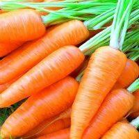 Сорта моркови посевы всходы выращивание уход