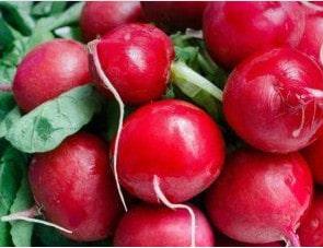 Сорт редиса жара красный цвет